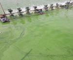 Kiểm soát độc tố tảo ao nuôi