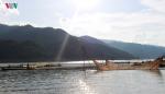 Nuôi thủy sản ở Tường Phong, mỗi hộ thu cả trăm triệu đồng mỗi năm