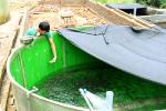 Chiến lược chiều sâu phát triển cá nước lạnh