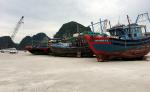 Quảng Ninh: Toàn tỉnh có 7.000 giấy phép khai thác thuỷ sản được cấp cho các tàu cá