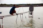 Trung Quốc siết nhập khẩu: Hàng trăm hộ nuôi tôm Móng Cái lao đao