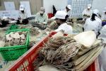 Hàng trăm tấn thủy sản tắc ở cửa khẩu do Trung Quốc tăng kiểm soát