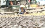Tất bật làng khô cá lóc Phú Thọ