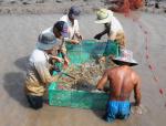 Trà Vinh: Hiệu quả từ mô hình nuôi tôm càng xanh toàn đực bẻ càng