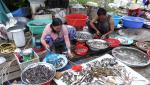 Đồng Tháp: Giá cá đồng giảm nhẹ