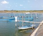 Một số mô hình nuôi ghép tôm và cá rô phi