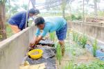Cần Thơ: Mô hình nuôi lươn tạo sinh kế cho nông dân vùng biên