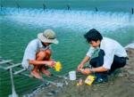 Lưu ý sử dụng hóa chất trong nuôi trồng thủy sản