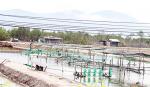 Ninh Hòa - Khánh Hòa: Sản xuất giống thủy sản gặp khó