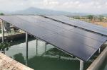 Năng lượng mặt trời: Nâng cao cạnh tranh cho tôm