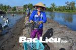 Huyện Hồng Dân (Bạc Liêu): Sản lượng tôm càng xanh ước đạt 800kg/ha/năm