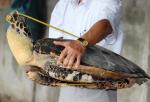 Khủng hoảng rùa châu Á