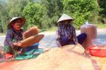 Ngư dân Nghệ An làm ruốc 'một nắng' xuất khẩu sang Trung Quốc thu trăm triệu đồng/ngày
