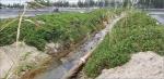 Nuôi trồng thủy sản chịu tác động ô nhiễm và biến đổi khí hậu