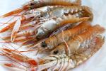 Scotland: Sản xuất bao bì bảo quản thủy sản từ vỏ tôm