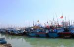 """Bình Thuận: Biển """"bạc"""" trong vụ cá nam"""