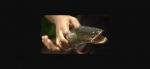 Mỹ kêu gọi diệt loài cá lóc sống được trên mặt đất