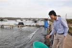 Kinh nghiệm nuôi tôm sạch ở Sóc Trăng