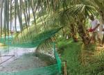 Đà Nẵng: Muốn giàu nuôi cá muốn khá cũng nuôi cá