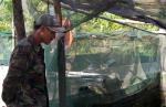 Quảng Bình: Nông dân Duy Ninh nuôi cá lóc vượt lũ