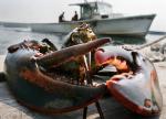 Canada: Công cụ mới giúp ngành tôm hùm ứng phó biến đổi khí hậu