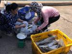 Gần 35 tấn cá lồng bè ở Kiên Giang chết chưa rõ nguyên nhân
