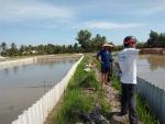 Hậu Giang: Mô hình nuôi Baba trên ruộng lúa mang lại hiệu quả ở xã Vị Thủy