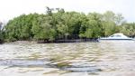 TP Hồ Chí Minh: Khuyến cáo NTTS sau sự cố tràn dầu trên sông Lòng Tàu
