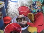Đồng Tháp: Chợ cá đồng khan hiếm cá