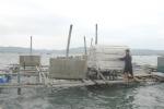 Nam Trung bộ khẩn trương bảo vệ lồng bè nuôi trồng thủy sản
