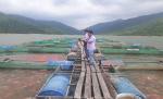 Bình Định: Nâng cao chất lượng cá nuôi trong hồ chứa