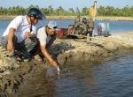 Góc chuyên gia: Lưu ý về môi trường trong ao nuôi tôm nước lợ