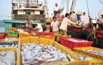 Hội Nghề cá Việt Nam: Sát cánh cùng ngư dân khai thác hải sản