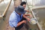 Biofloc: Giải pháp mới cho nghề nuôi cá kèo