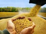 Điều kiện, trình tự thủ tục nhập khẩu thức ăn thủy, sản phẩm xử lý môi trường NTTS
