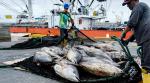 EU giơ thẻ vàng với thủy sản Ecuador vì IUU
