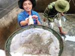 Quảng Ninh: Chủ động nguồn giống chất lượng cao