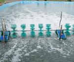 Màu nước ao nuôi: Nhân tố tác động và giải pháp