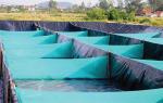 Công nghệ mới xử lý nước nuôi tôm