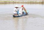 Đồng Tháp: Hoàn thiện chuỗi sản xuất  giống cá tra 3 cấp