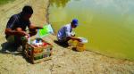 Chế phẩm sinh học giúp nuôi tôm thân thiện với môi trường?