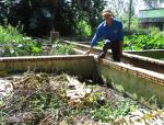 Đồng Tháp: Hiệu quả nuôi lươn trong hồ xi măng