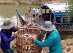 Đồng Tháp: Giá cá tra nguyên liệu tiếp tục giảm