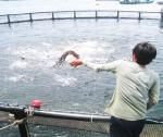 Khoa học kỹ thuật trong quản lý môi trường nuôi cá biển