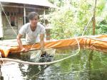 Sóc Trăng: Cung cấp lươn, chạch lấu giống chất lượng
