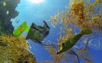 Điều tra cơ bản tài nguyên, môi trường biển và hải đảo