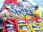 Bình Định: Chú trọng phát triển kinh tế biển