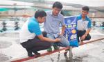 C.P. Việt Nam: Đột phá thành công cùng mô hình CPF-Combine