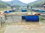 Quảng Ngãi: Thu nhập khá nhờ nuôi cá kết hợp du lịch