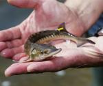 Sản xuất giống thủy sản lên tầm mới